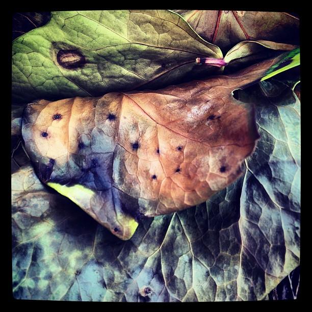Leaves #instagram
