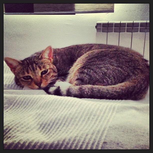 Està molt cansada #instagram #mel #gat