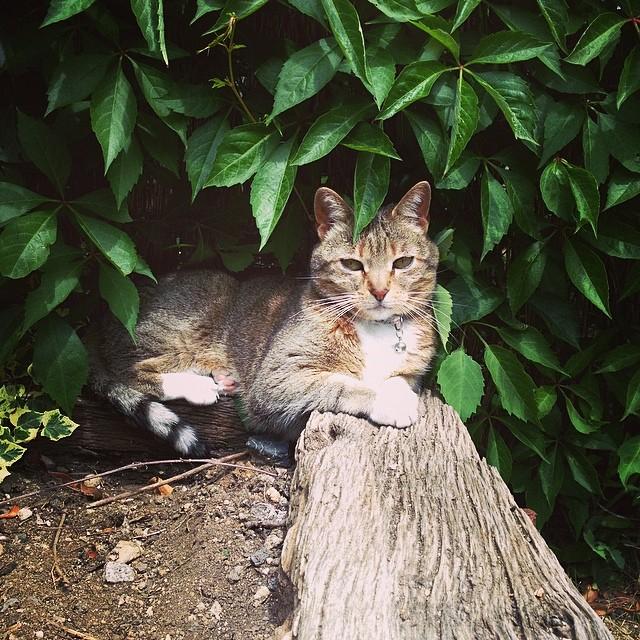 #Nature #cat #Mel #instagram La gatets Mel