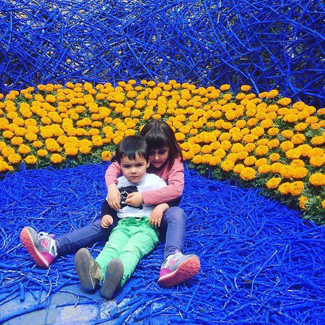 #flors #girona #Instagram
